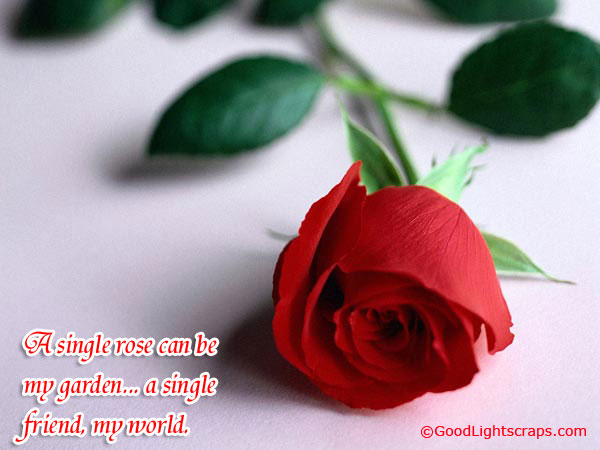 A Single Rose Can be My Garden… A SIngle Friend My World