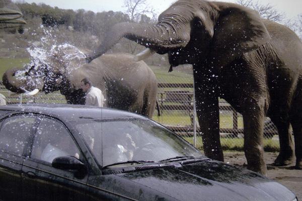 Funny Elephant Washes the Car