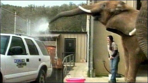 Funny Elephant wash the Dirty White Car