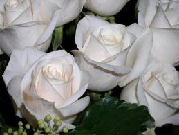 Awesome White Roses Picture for Fb Share