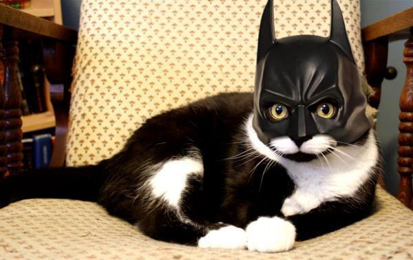 Funny Bat Cat Picture for Fb Share