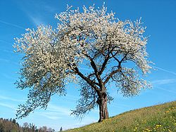 Beautiful Spring Tree Picture