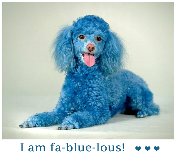 Funny Blue Poodle Dog For Facebook Sharing