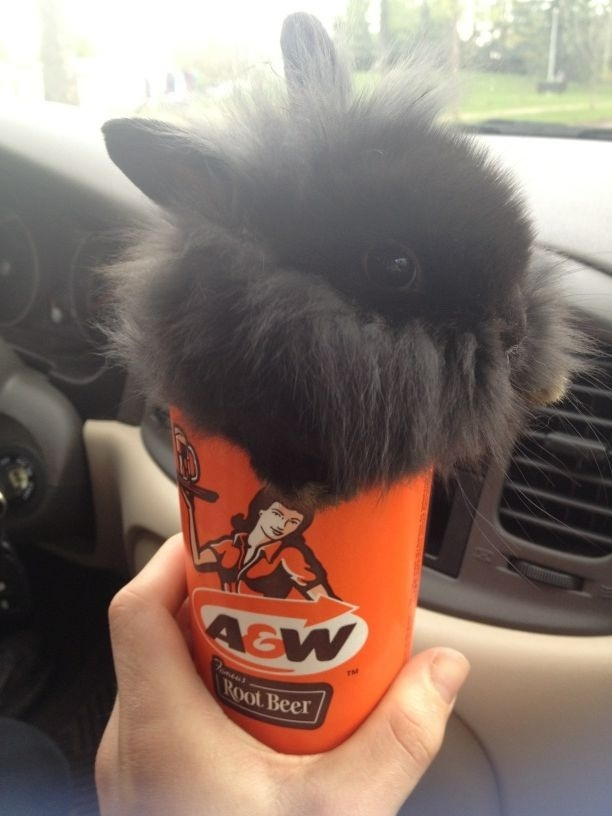 Bunny in a cup Funny Rabbit Photo