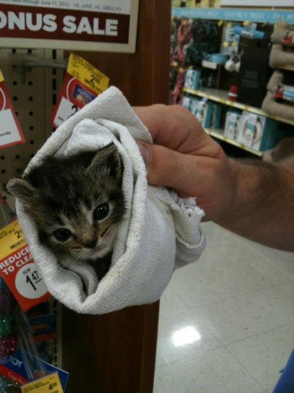 Funny Cat Picture Burrito Kitty from my work.