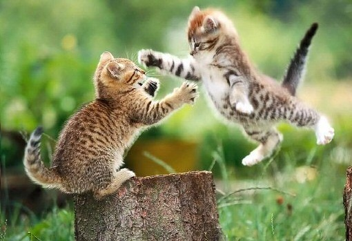 Funny Cats Fight Picture