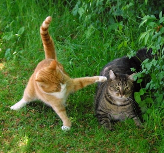 Fight Between Two Funny Cats