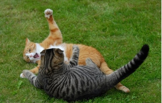 Funny Cat Fight in the Ground