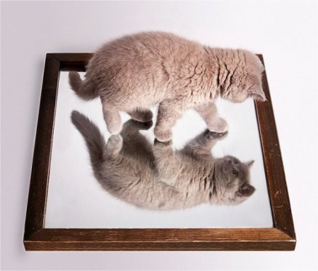 Funny White Cat Looking in the Mirror