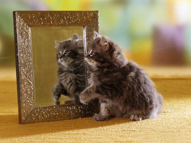 Funny Cat Looking cute