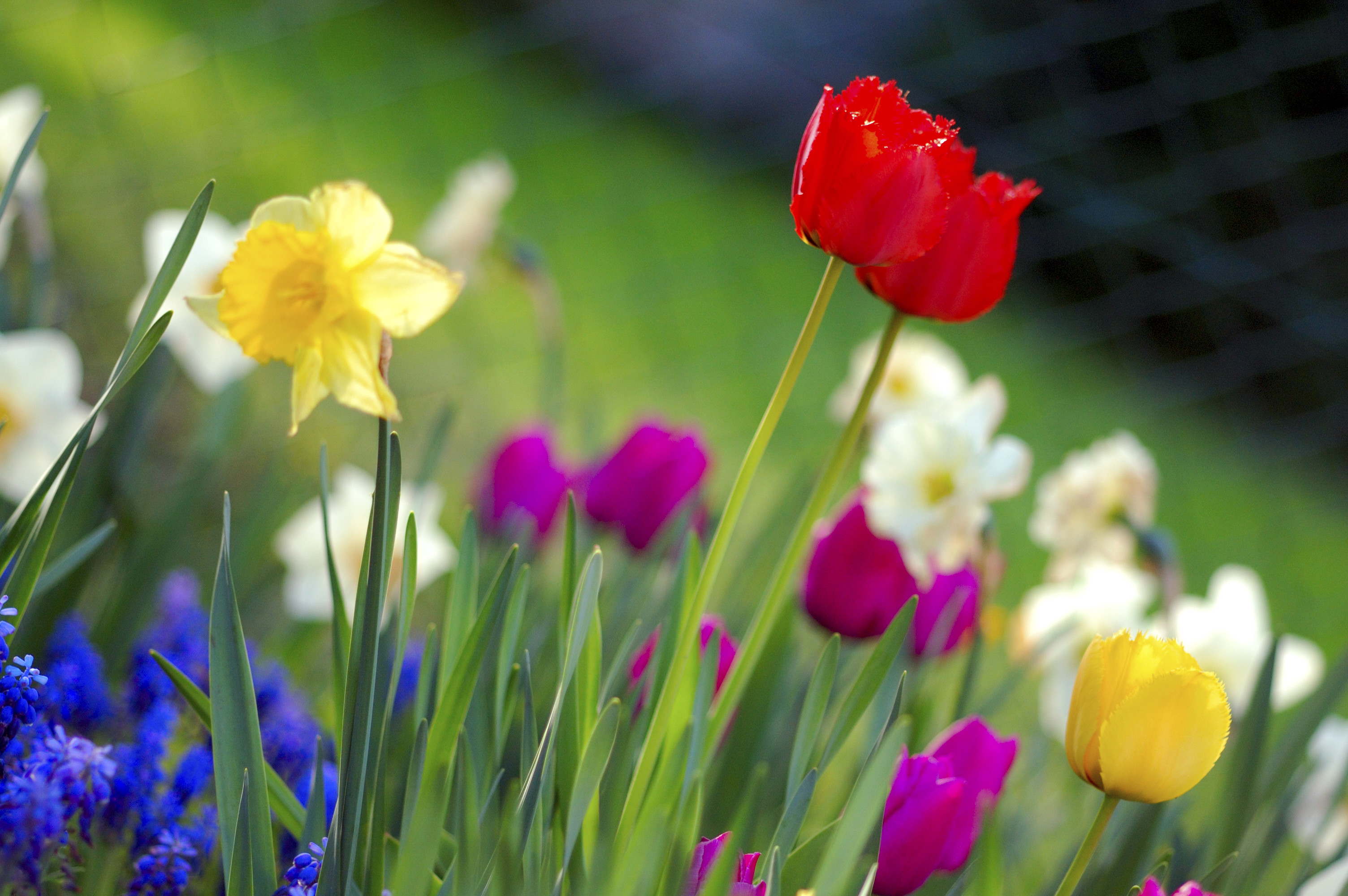 Colourful Spring Garden picture