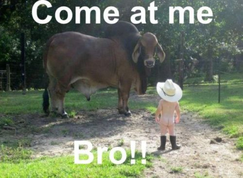 Come at me Bro ! ! Funny Animal Picture
