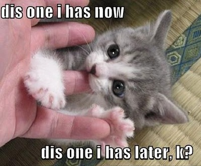 This one I has Now Funny Cat Picture