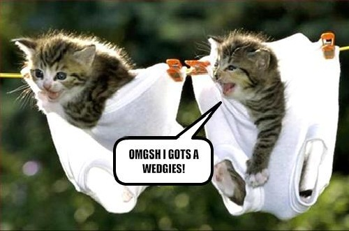 Funny Twin Cats Picture