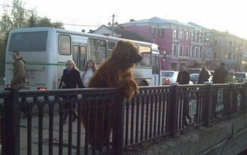 Daily Morning Epicness Funny Bear Image