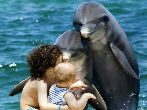 Damn humans, always ruining family photos Funny Baby Image