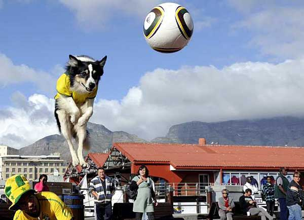 Funny Dog Playing Soccer Picture