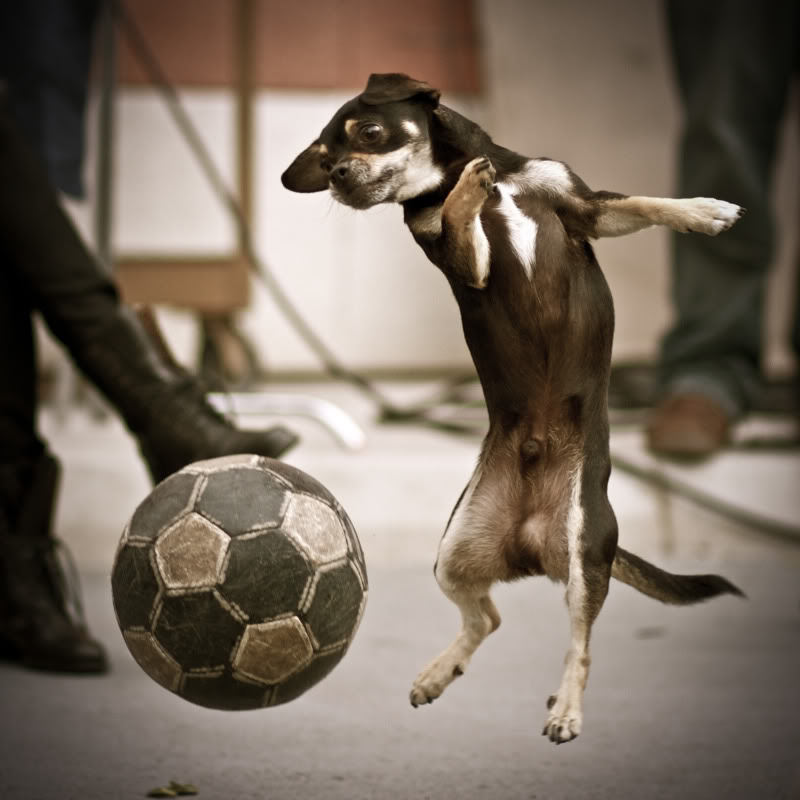Funny Black Dog Playing Soccer Picture