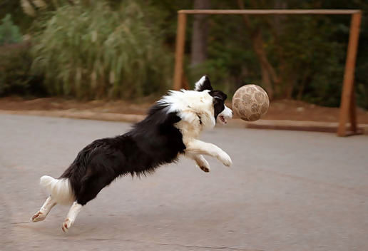 Funny Dog Alone Playing Soccer Image