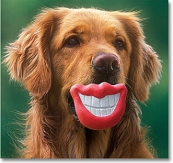 Funny Dog white Teeth with Red Lips Picture