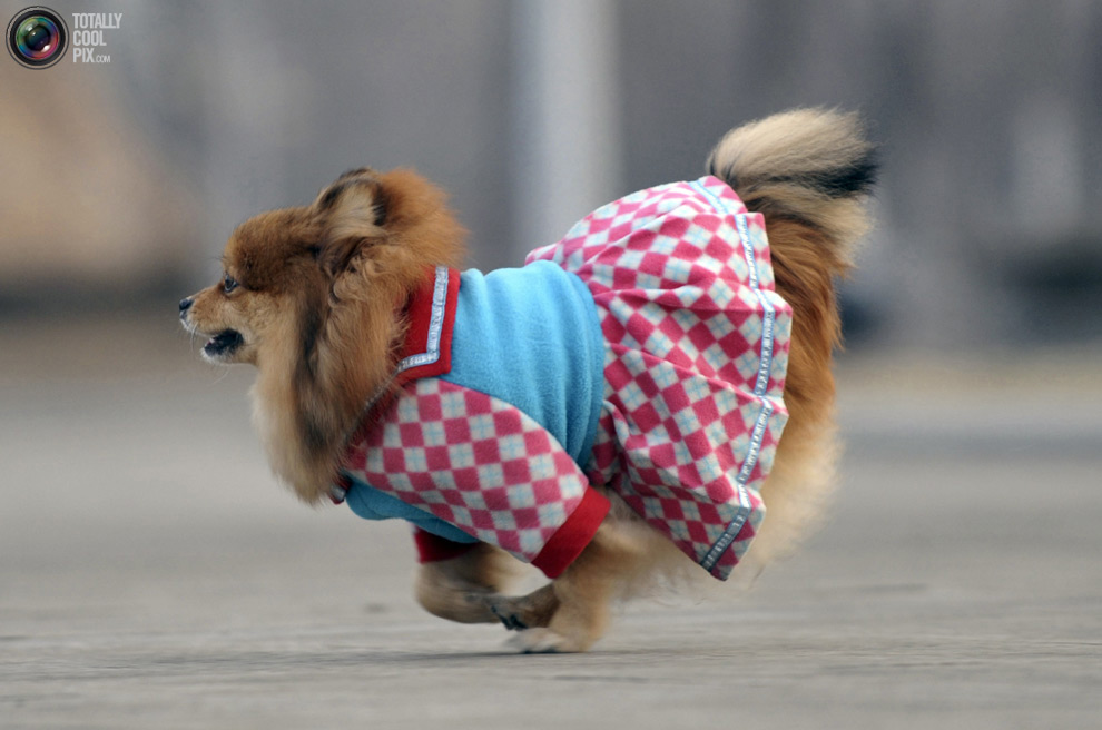 Funny Dog in Funny Dress Picture