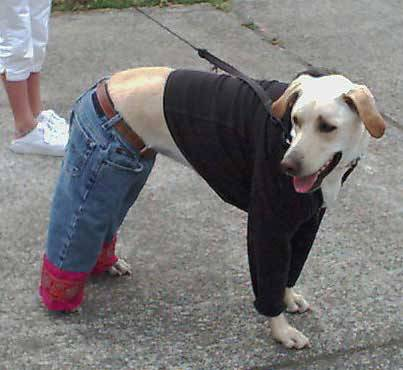 Funny Well Dressed Dog Picture