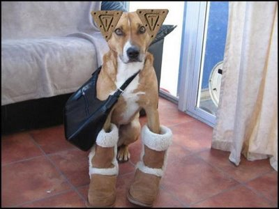 Funny Dog with ladies Purse in Ladies Shoes