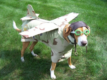 Funny Dog in Aeroplane Dress