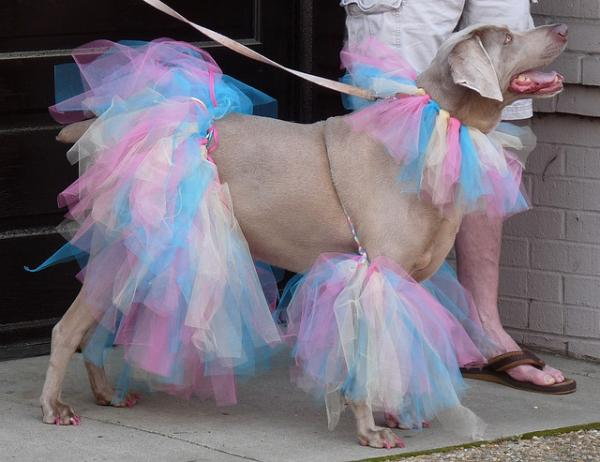 Funny Dog in funny Dress Picture for Friendster