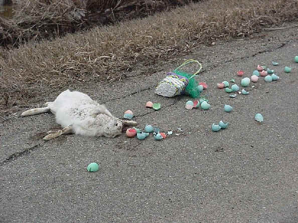 Easter is cancelled, sorry kids Funny Animal Image