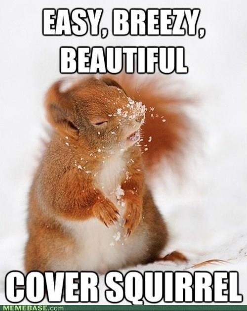 Easy, breezy, beautiful.. Funny Animal Picture