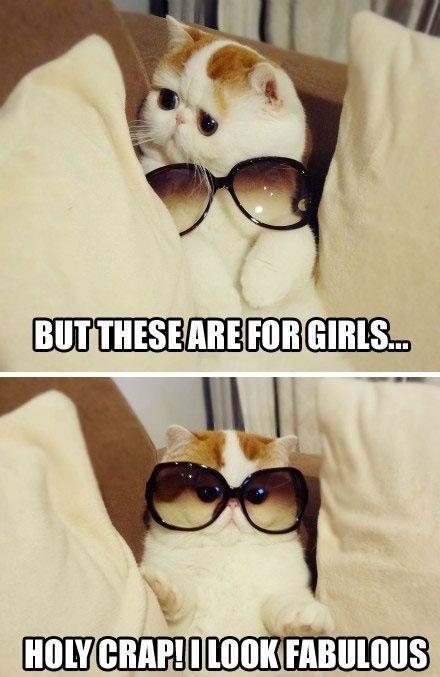 Fabulous kitten Funny Cat Picture