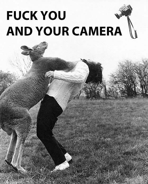 Fuck you and your camera Funny Animal Picture
