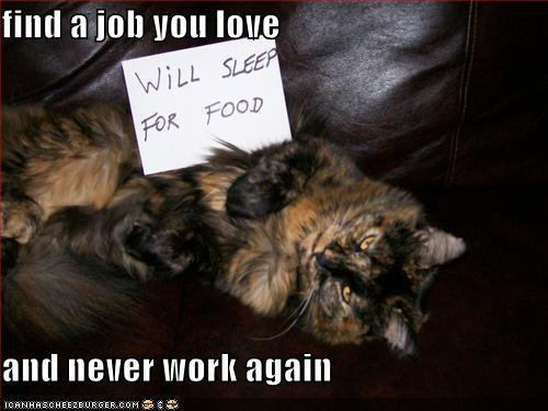 Find a job You Love - Funny Cat Quote