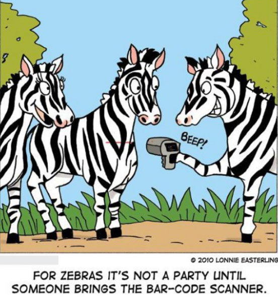 For Zebras It's Not a Party Until Funny Zebra Picture