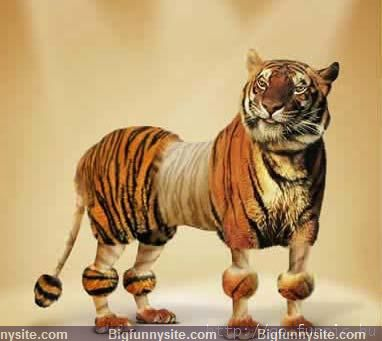 Funny Amazing Tiger Haircut Image