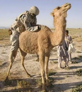 A Man sitting on the Camel