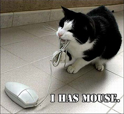 Funny cat with the Computer Mouse