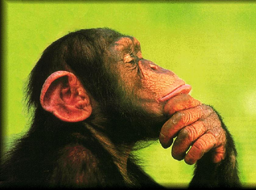 Funny Chimp Thinking Image
