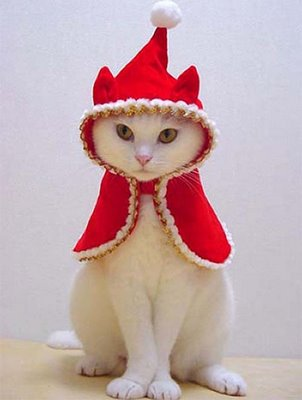 Funny Christmas White Cat in Christmas Dress
