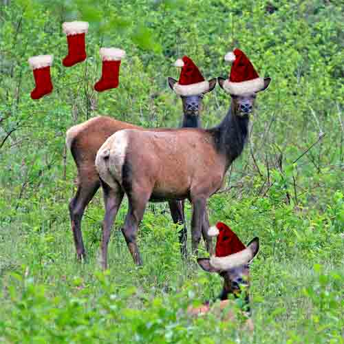 Funny Christmas Animals in Red Caps