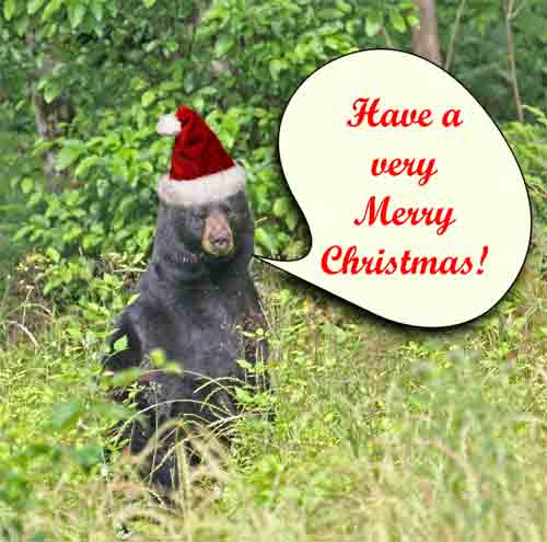 Have a Very Merry Christmas Funny Christmas Animal Picture