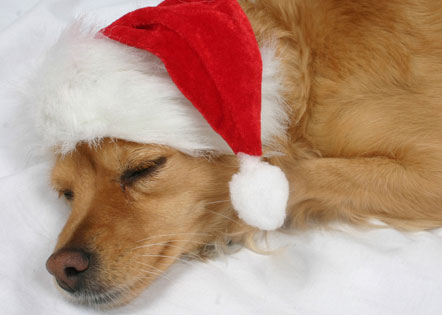 Funny Christmas Dog in Cap