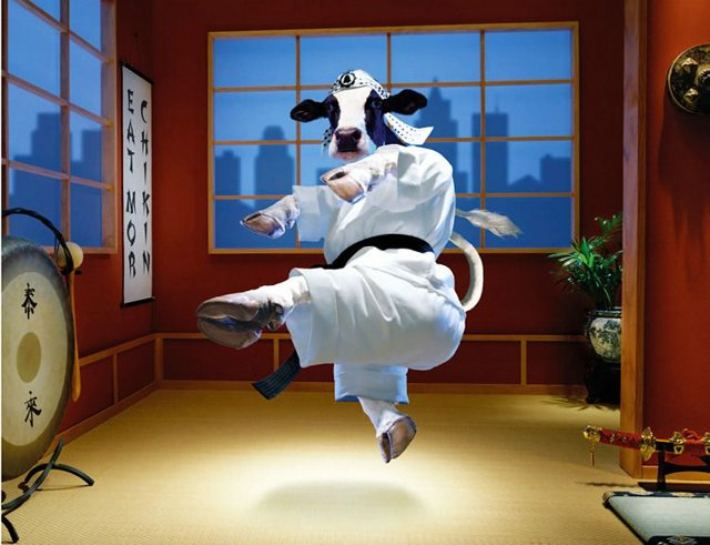 Funny Cow Kung Fu Picture