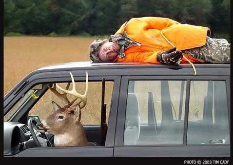 Funny Deer in the Car