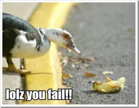 Lolz you Fail !! Funny Bird on the Road