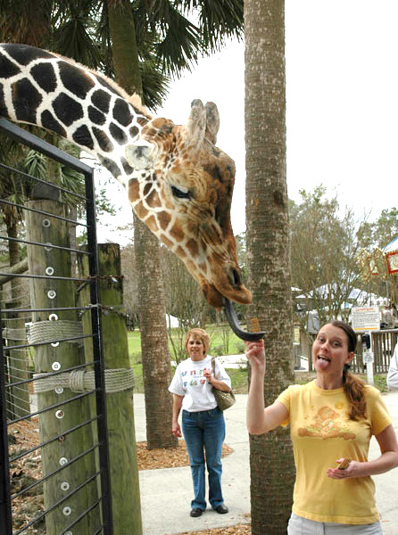 Funny Giraffe with a Girl Picture