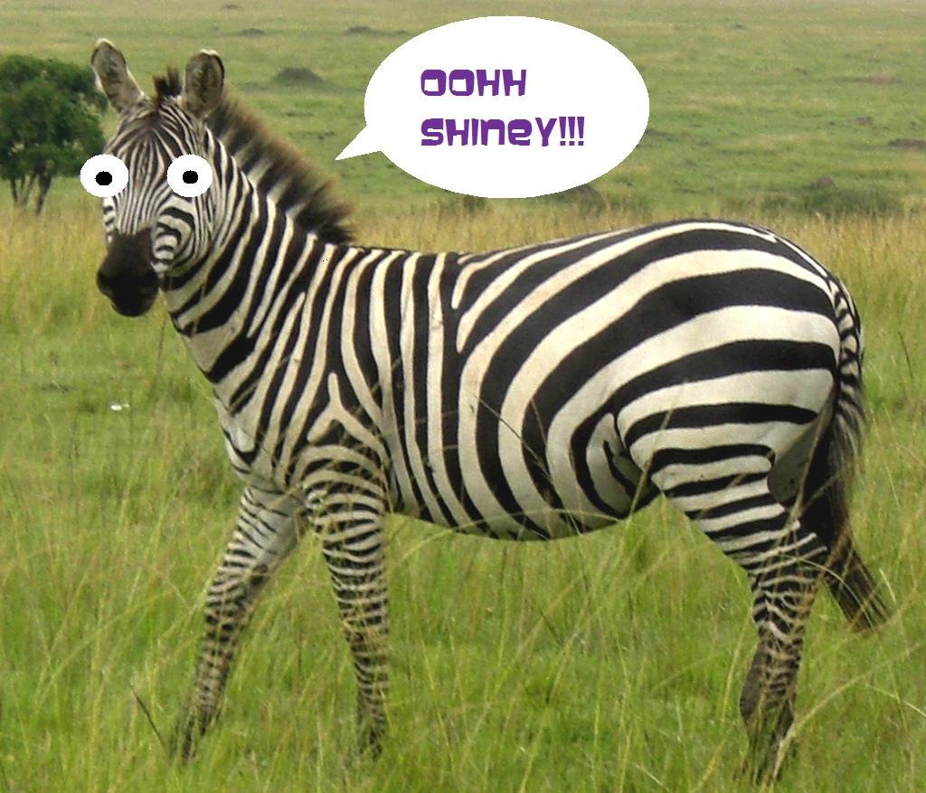 Funny Zebra Eyes Picture For Share