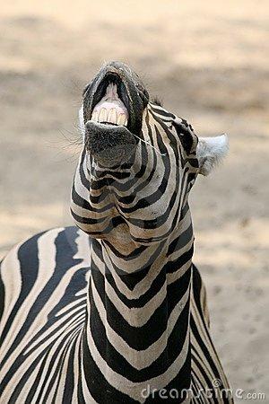 Funny Zebra Image for Friendster