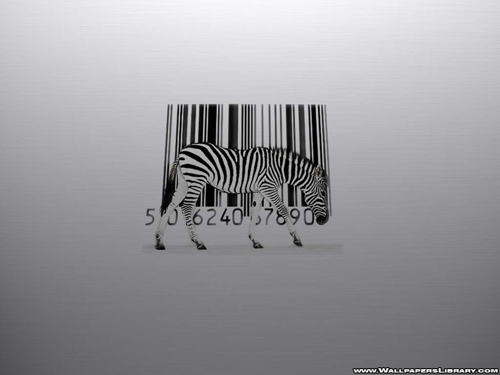 Funny Zebra Wallpaper